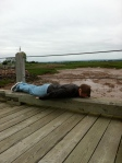 Planking at the Bay of Fundy