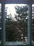 Directly out my window - TREES!